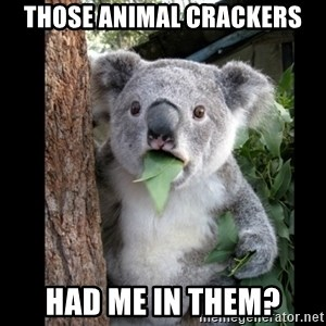 Koala can't believe it - Those animal Crackers had me in them?