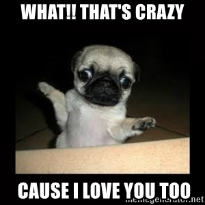 Confused Pug - What!! That's crazy  Cause I love you too