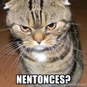 angry cat 2 - nentonces?