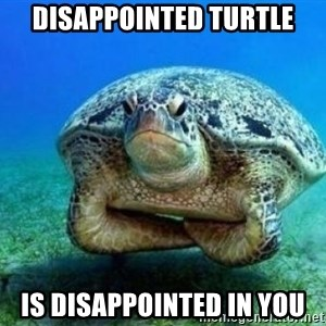 disappointed turtle - disappointed turtle is disappointed in you