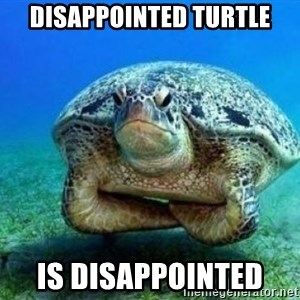 disappointed turtle - disappointed turtle is disappointed