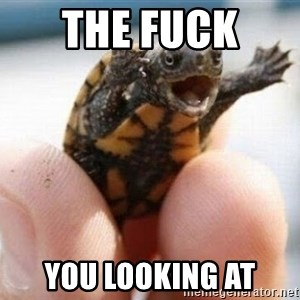 angry turtle - The Fuck  you looking at
