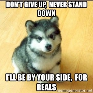 Baby Courage Wolf - don't give up,  never stand down i'll be by your side,  for reals
