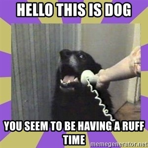 Yes, this is dog! - Hello this is dog you seem to be having a ruff time