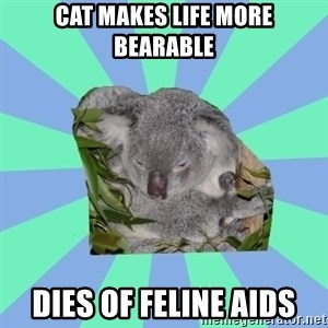 Clinically Depressed Koala - cat makes life more bearable dies of feline aids