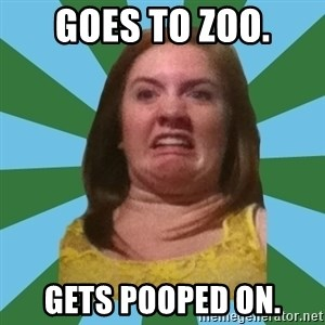 Disgusted Ginger - goes to zoo. gets pooped on.