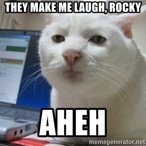 Serious Cat - they make me laugh, rocky aheh
