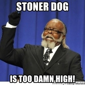 The tolerance is to damn high! - stoner dog is too damn high!