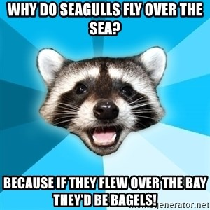 Lame Pun Coon - why do seagulls fly over the sea? because if they flew over the bay they'd be bagels!