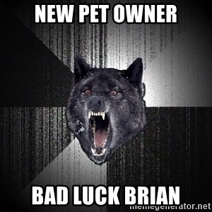 Insanity Wolf - New pet owner bad luck brian