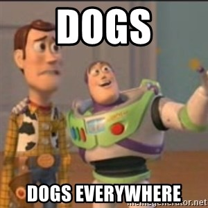 Buzz - dogs dogs everywhere