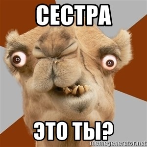 Crazy Camel lol - Сестра Это ты?
