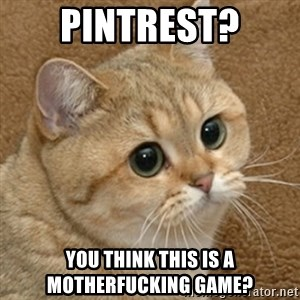 motherfucking game cat - Pintrest? You think this is a motherfucking game?