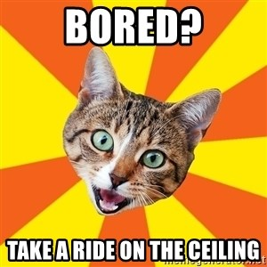 Bad Advice Cat - bored? take a ride on the ceiling