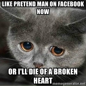 Sad Cute Cat - Like pretend man on facebook now or I'll die of a broken heart