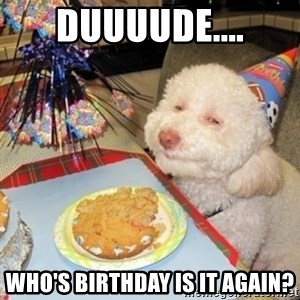 Birthday dog - DUUUUDE.... WHO'S BIRTHDAY IS IT AGAIN?