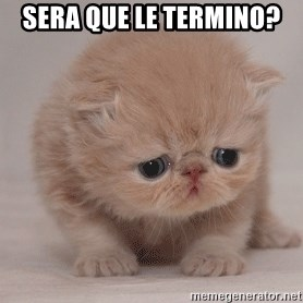 Super Sad Cat - sera que le termino?
