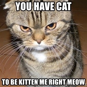 angry cat 2 - you have cat to be kitten me right meow