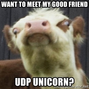 angry ghetto cow - Want to meet my good friend udp unicorn?