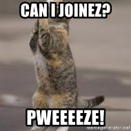 Begging Cat - Can I JOINEz? Pweeeeze!