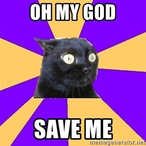 Anxiety Cat - OH MY GOD SAVE ME