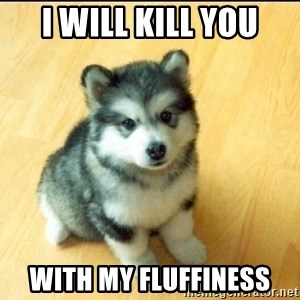 Baby Courage Wolf - i will kill you with my fluffiness