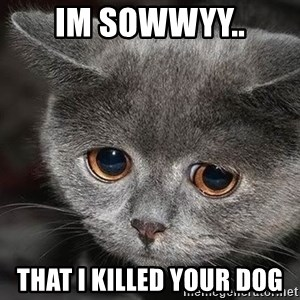 Sadcat - im sowwyy.. that i killed your dog