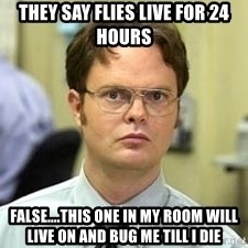 Dwight Shrute - They say flies Live for 24 hours False....this one in my room will live on and bug me till I dIe