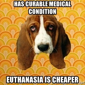 SAD DOG - has curable medical condition Euthanasia is cheaper