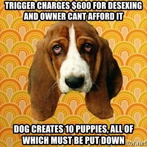 SAD DOG - TRIGGER CHARGES $600 FOR DESEXING AND OWNER CANT AFFORD IT dog creates 10 puppies, all of which must be put down