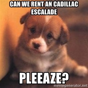 cute puppy - Can we rent an cadillac Escalade Pleeaze?