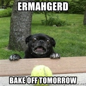Ermahgerd Pug - ERMAHGERD Bake off tomorrow