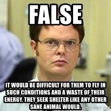 Dwight Shrute - FALSE it would be difficult for them to fly in such conditions and a waste of their energy. They seek shelter like any other sane animal would.