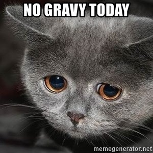 Sadcat - No gravy today
