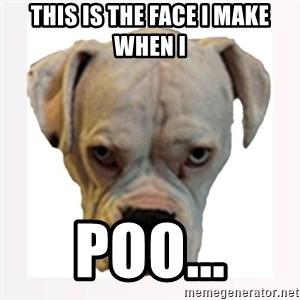 stahp guise - THIS IS THE FACE I MAKE WHEN I  POO...