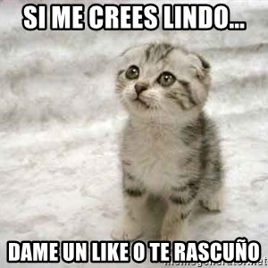 The Favre Kitten - SI ME CREES LINDO... DAME UN LIKE O TE RASCUÑO