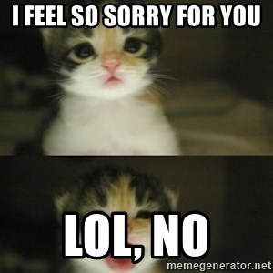Adorable Kitten - i feel so sorry for you lol, no
