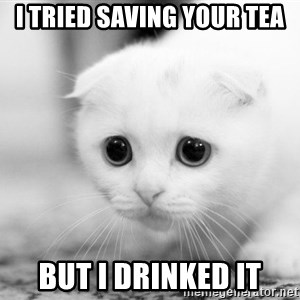 Sadcat - I tried saving your tea but I drinked it