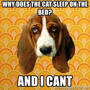 SAD DOG - WHY DOES THE CAT SLEEP ON THE BED? AND I CANT
