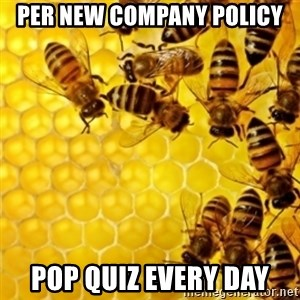 Honeybees - per new company policy pop quiz every day