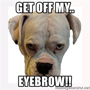 stahp guise - GET OFF MY.. EYEBROW!!