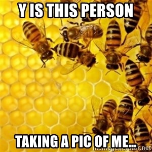 Honeybees - Y IS THIS PERSON TAKING A PIC OF ME…