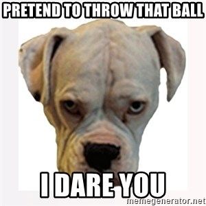 stahp guise - pretend to throw that ball i dare you