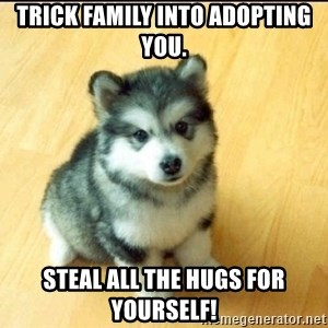 Baby Courage Wolf - Trick family into adopting you. Steal all the hugs for yourself!