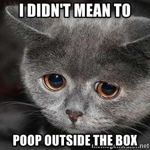Sadcat - I didn't Mean to Poop OUTSIDE THE BOX