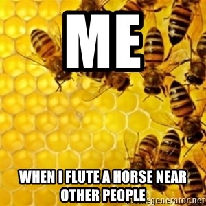 Honeybees - me when i flute a horse near other people