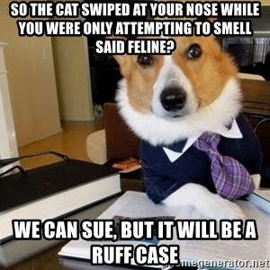 Dog Lawyer - So the cat swiped at your nose while you were only attempting to smell said feline? we can sue, but it will be a RUFF case