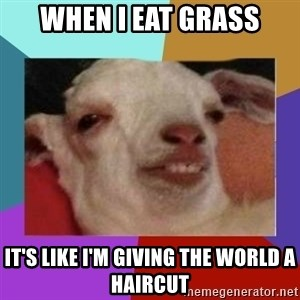 High goat - When I eat grass it's like I'm giving the world a haircut