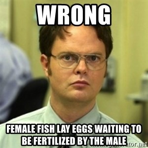 wrong meme - WRONG FEMALE FISH LAY EGGS WAITING TO BE FERTILIZED BY THE MALE