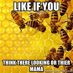 Honeybees - LIKE IF YOU THINK THERE LOOKING OR THIER MAMA